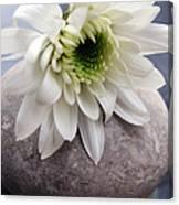 White Blossom On Rocks Canvas Print