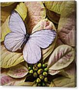 White Butterfly On Poinsettia Canvas Print