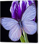 White Butterfly On Purple Tulip Canvas Print