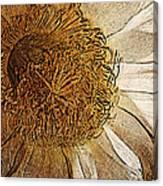 White Cactus Flower Gold Leaf Canvas Print