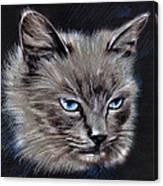 White Cat Portrait Canvas Print