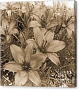 White Chocolate Canvas Print