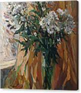 White Chrysanthemums Canvas Print