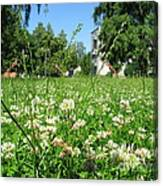 White Clover Field And The Playground Canvas Print
