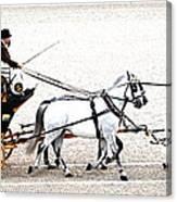 White Coach Horses Canvas Print