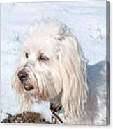 White Coton De Tulear Dog In Snow Canvas Print