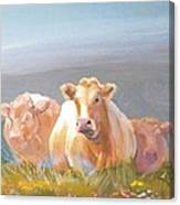 White Cows Painting Canvas Print