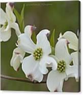 White Cross Flowers Canvas Print