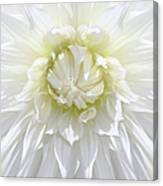White Dahlia Floral Delight Canvas Print