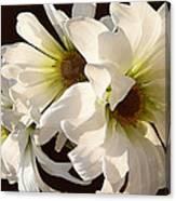 White Daisies In Sunshine Canvas Print
