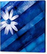 White Daisy On Blue Two Canvas Print