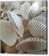 White Double Ark Shells Canvas Print