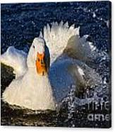 White Duck 1 Canvas Print