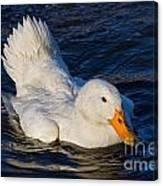 White Duck 2 Canvas Print
