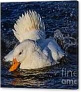 White Duck 3 Canvas Print