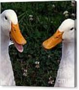 White Ducks Quacking Canvas Print