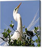 White Egret In Spring Canvas Print