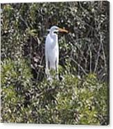 White Egret In The Swamp Canvas Print
