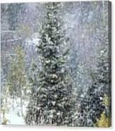 White Fall Canvas Print