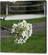 White Florescence Canvas Print