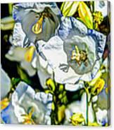 White Flower Spendor Canvas Print