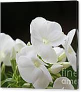 White Flowers 3 Canvas Print