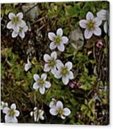 White Flowers And Moss Canvas Print