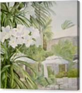 White Flowers Aruba Canvas Print