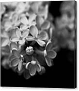 White Flowers In Black And White Canvas Print