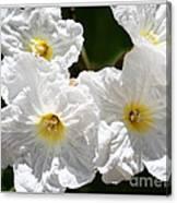 White Flowers In The Desert Canvas Print