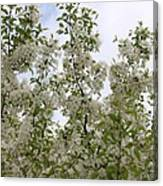 White Flowers On Branches Canvas Print
