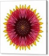 Galliardia Arizona Sun I Flower Mandala White Canvas Print