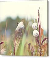 White Garden Snail Canvas Print
