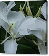 White Ginger Lily Canvas Print