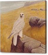White Gyrfalcon Canvas Print