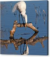 White Heron In The Looking Glass Canvas Print