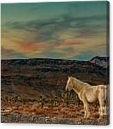 White Horse At Sunset Canvas Print