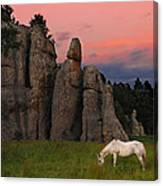 White Horse Grazing Canvas Print