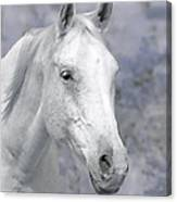 White Horse In Lavender Pasture Canvas Print