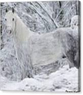 White Horse In The Snow Canvas Print