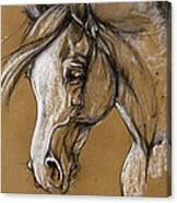 White Horse Soft Pastel Sketch Canvas Print