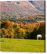 White Horses Grazing With View Of Green Mtns Canvas Print