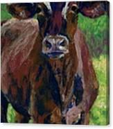 White Horseshoe Canvas Print