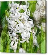 White Hyacinth Flowers Digital Art Canvas Print