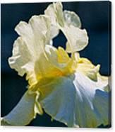 White Iris With Yellow Canvas Print