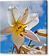 White Lily Flower Against Blue Sky Art Prints Canvas Print