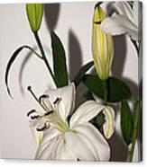 White Lily Spray Canvas Print