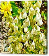 White Locoweed On Highline Trail In Glacier National Park-montana Canvas Print