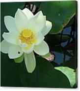 White Lotus I Canvas Print