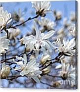 White Magnolia Magnificence Canvas Print
